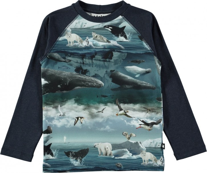 Molo Jungen Langarm-Shirt/Longsleeve REMINGTON Arctic Landscape