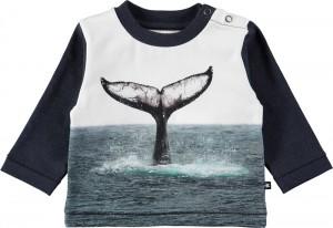 Molo Mini Jungen Langarm-Shirt/Longsleeve ENOVAN Whale Tail
